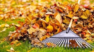 fall leaf disposal